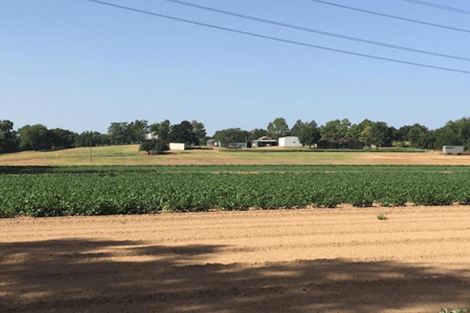 Demases Farms